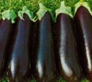 VDB Pro Seeds F1 Hybrid Long Violet Eggplant