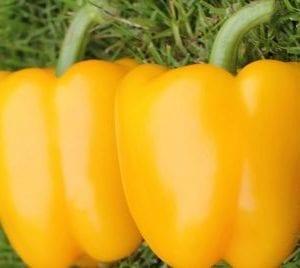 VDB Pro Seeds Hybrid Yellow Sweet Pepper